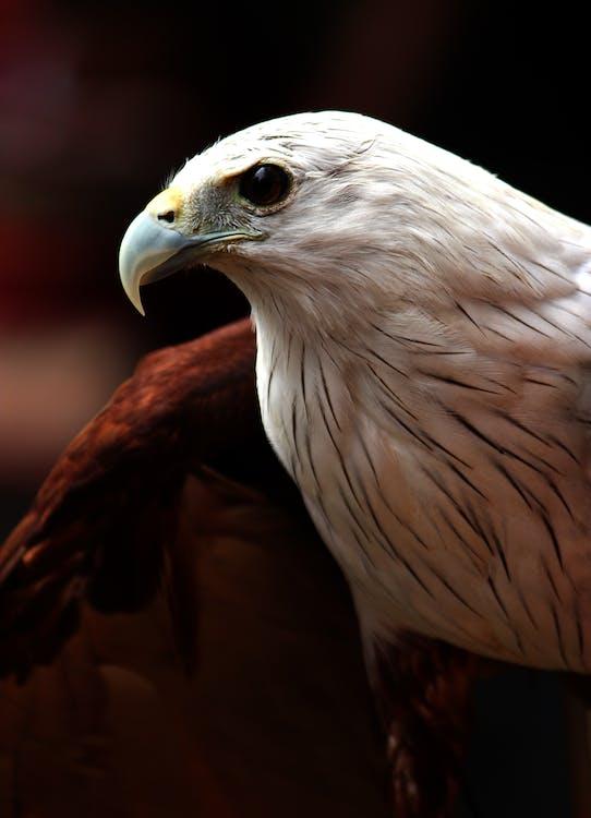 깃털, 날개, 대머리 독수리