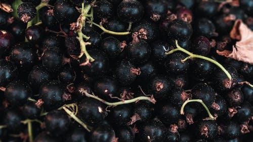 Free stock photo of blackberry, dark, nature