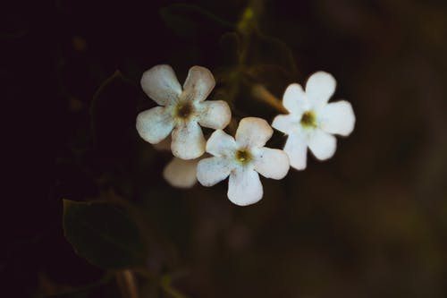 Foto profissional grátis de broto, close, delicado, flora