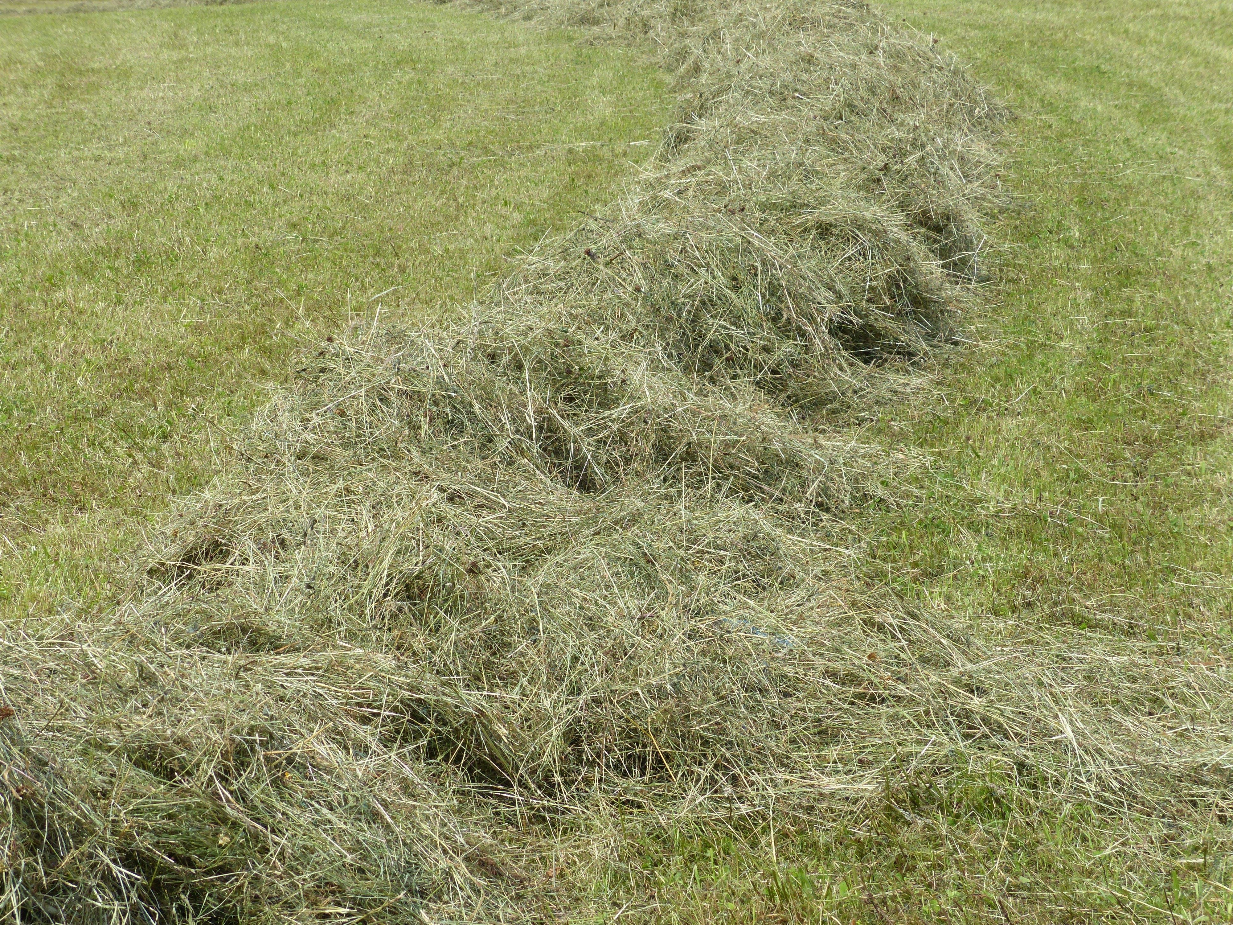 Free stock photo of contact, crop, forage, geschwadet