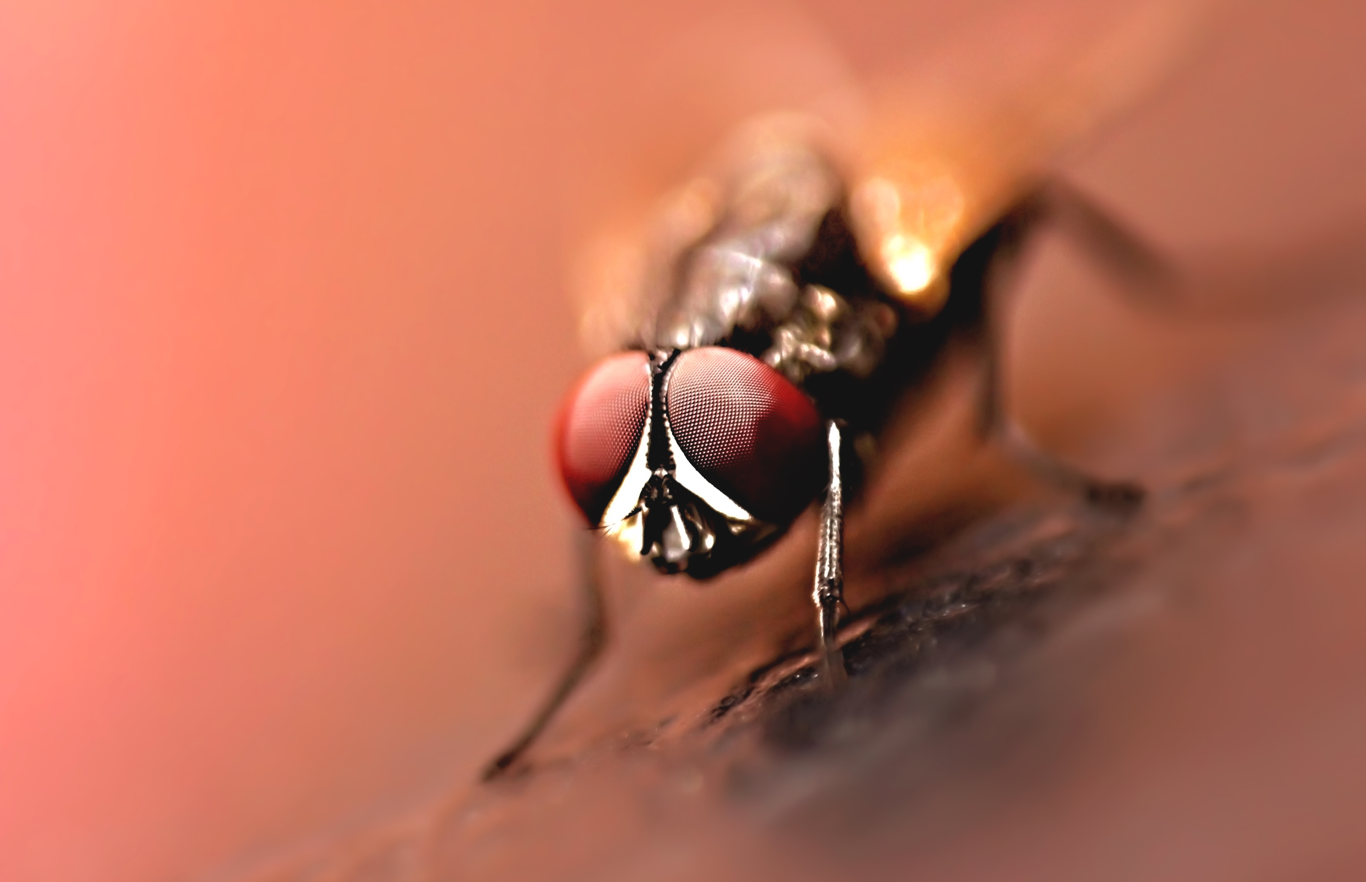 Close-up Photography of Brown Wasp