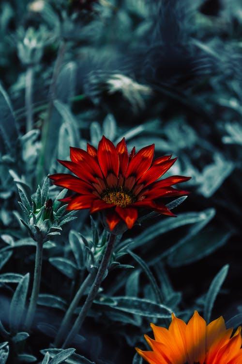 bosc, camp de flors, flor