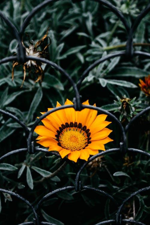 Photos gratuites de arrière-plan vert, barrière, centrale, champ de fleurs