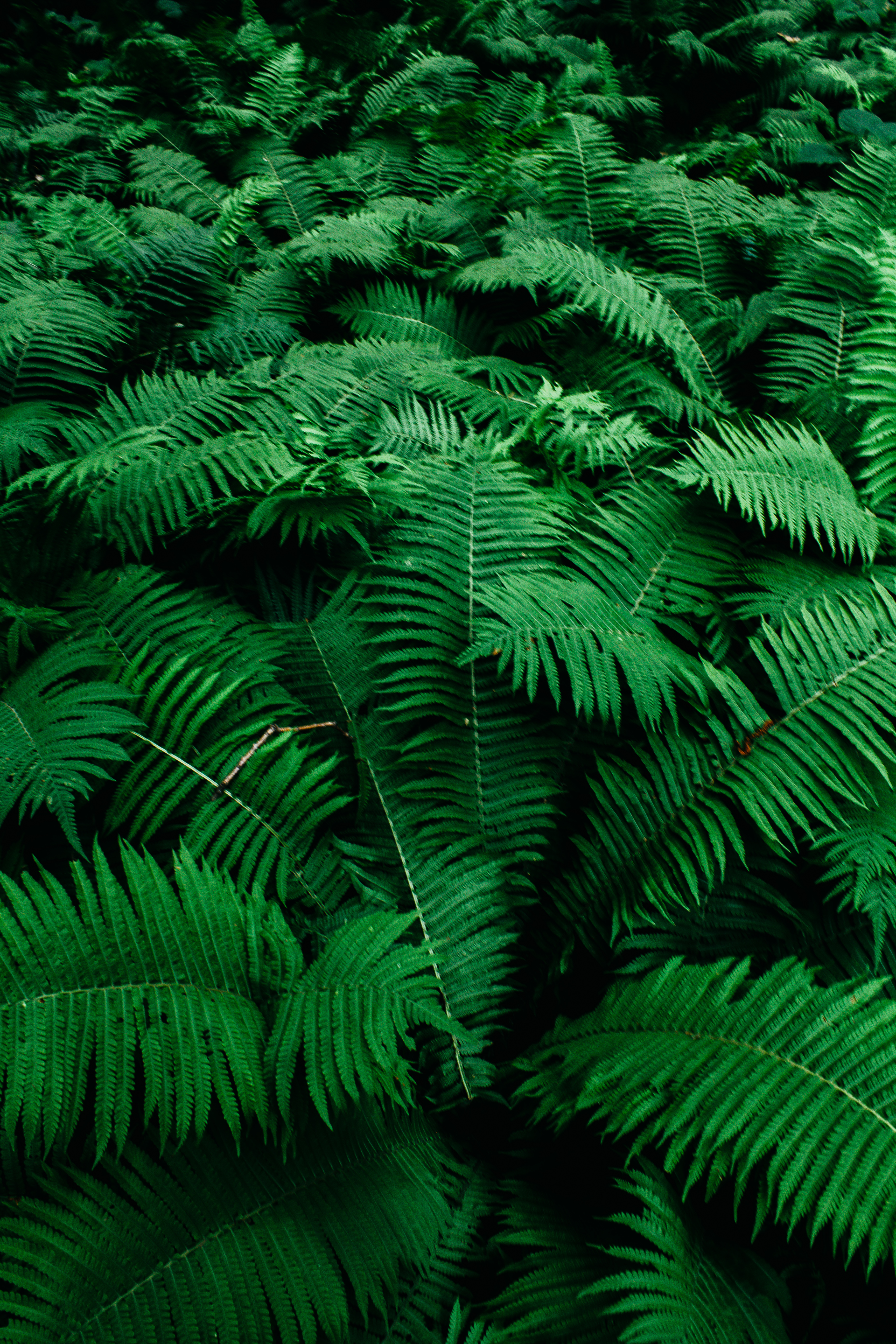 Close-up Photo of Green Fern Plants