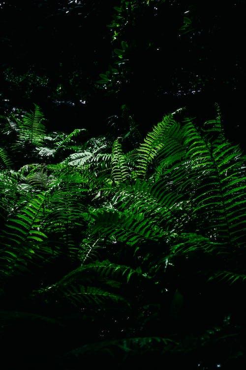 гілка з листям, дерева, дощ