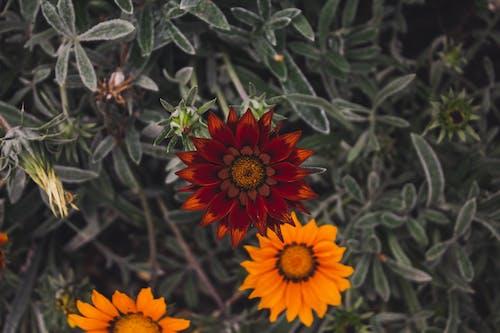 Photos gratuites de arrière-plan vert, centrale, champ de fleurs, feuille