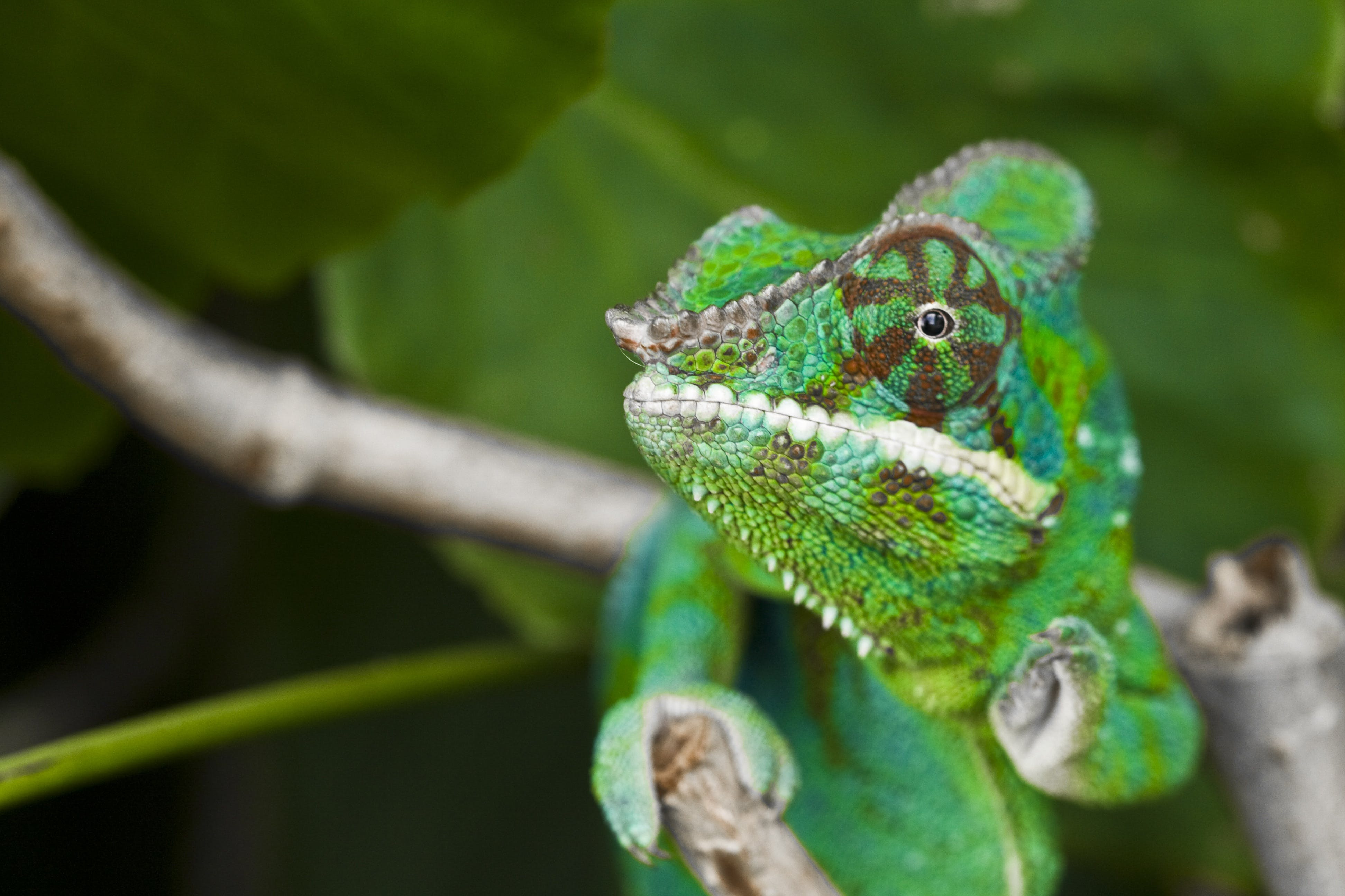 Free stock photo of adult, chameleon, meeting