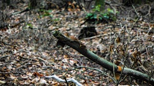 Foto d'estoc gratuïta de bosc, branca, fulles