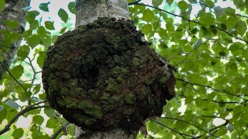 Foto d'estoc gratuïta de arbre, bosc, fulles, polipur