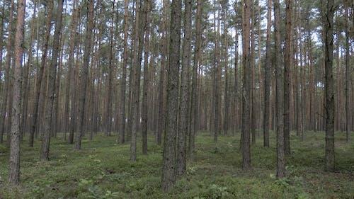 Foto d'estoc gratuïta de boscos, conformisme, depressió, repetició