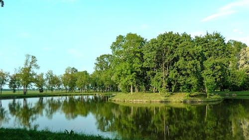Foto d'estoc gratuïta de arbres, illa, llac, verd