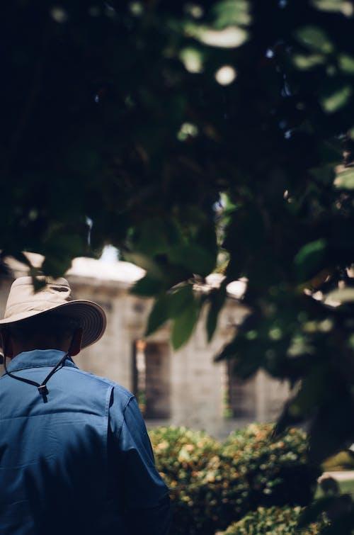 Kostnadsfri bild av ha på sig, hatt, löv, man