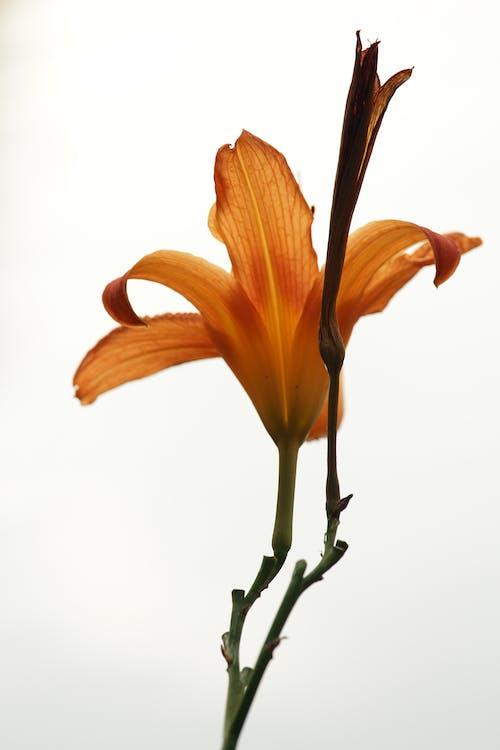 꽃, 꽃잎, 밝은, 색깔의 무료 스톡 사진