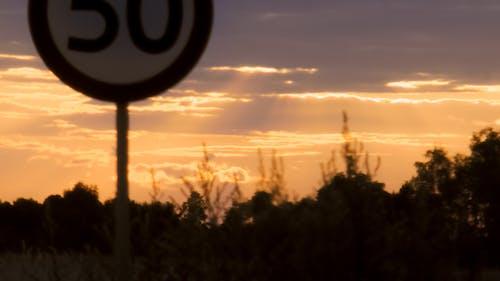 Foto d'estoc gratuïta de bosc, capvespre, carretera, signe