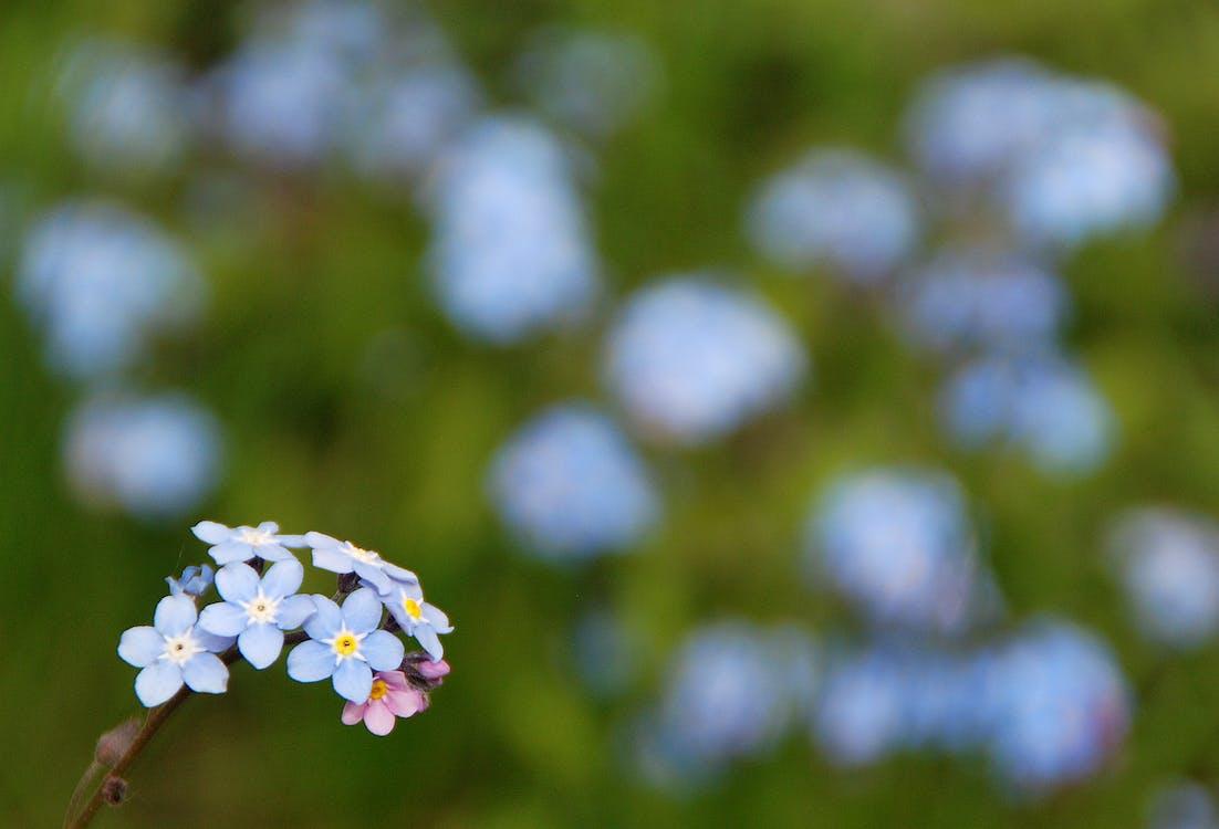 alan, Aşk, Bahçe