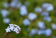 love, field, flowers