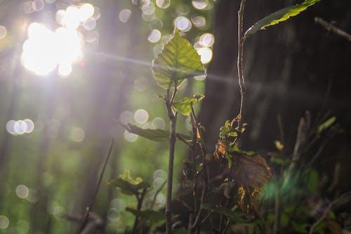 Gratis lagerfoto af aftensol, bregne blade, grønt blad, løv