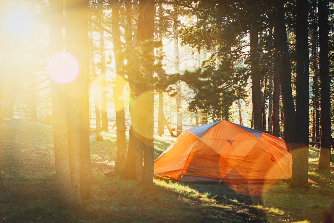 активный отдых, деревья, дневной свет