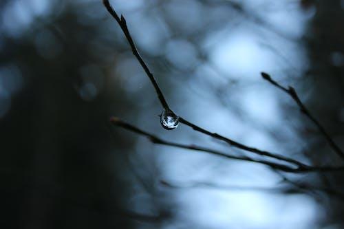 Shallow Focus Photo of Water Drop