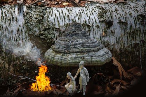Základová fotografie zdarma na téma hasiči, pyro, strom