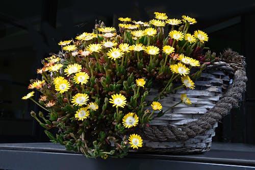 Základová fotografie zdarma na téma kvetoucí květiny, zátiší