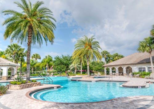 Ingyenes stockfotó kikapcsolódás, medence mellett, pálmafák, paradicsom témában