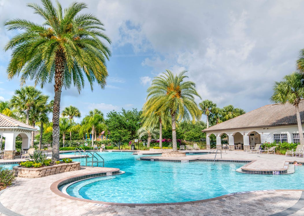 Swimming Pool Near Palm Tree