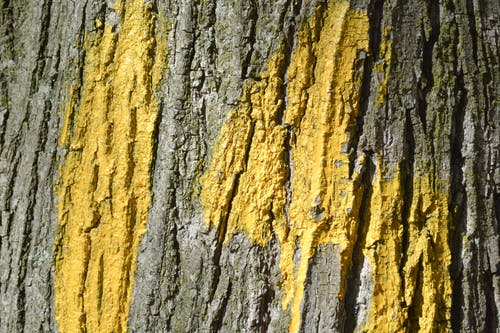 Free stock photo of paint, texture, tree bark, wood
