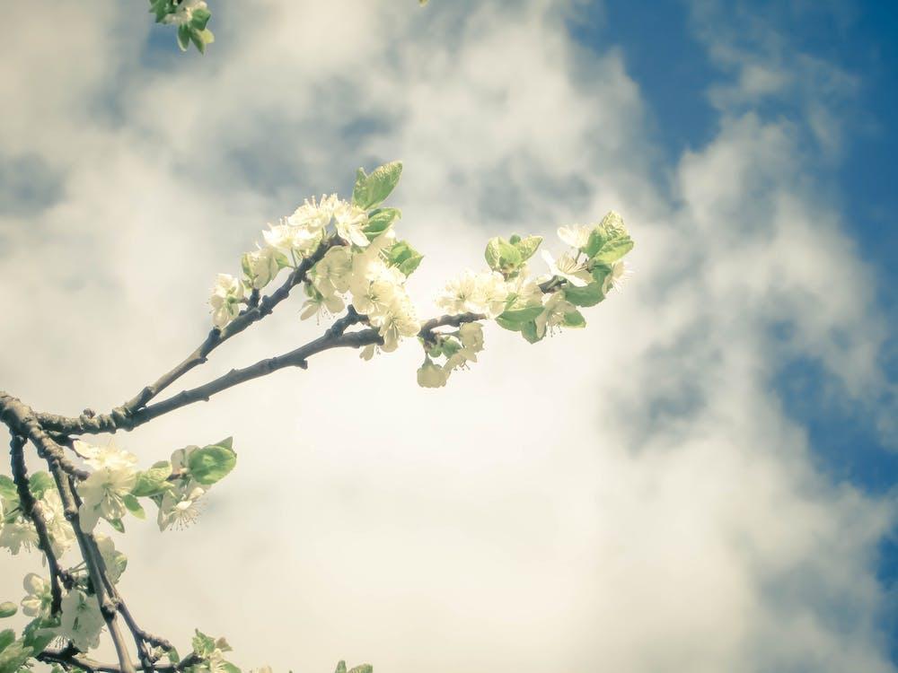 ảnh macro, cây táo, chụp ảnh vĩ mô