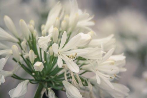 Foto stok gratis alam, berbunga, bunga putih, bunga taman