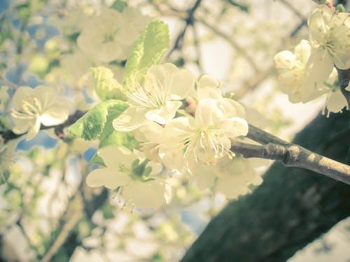 Photos gratuites de beauté dans la nature, beauté dans la nature aucun peuple, belle fleur, blanc