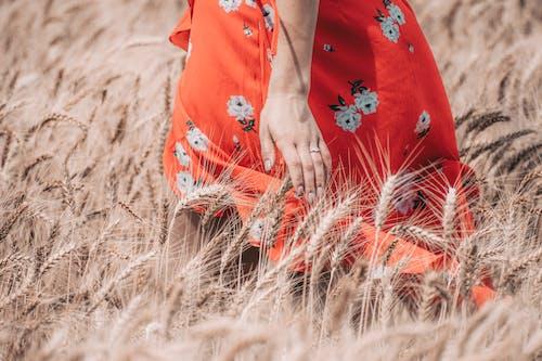 Immagine gratuita di bellissimo, campo, campo di grano, donna