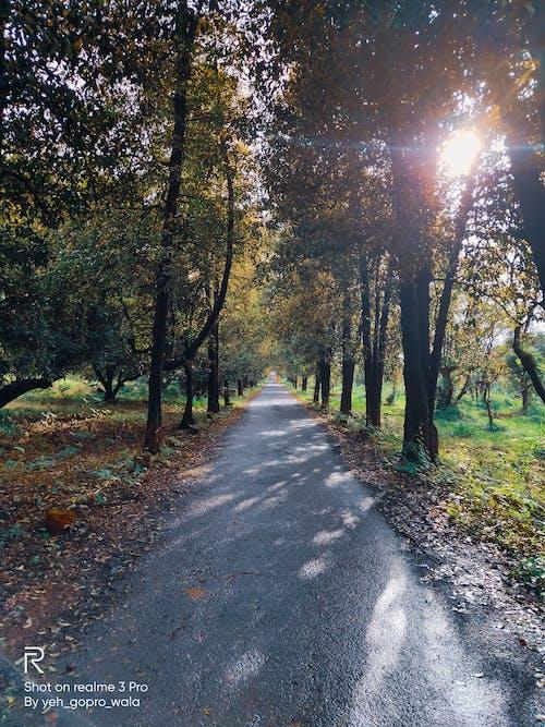 #mobilechallenge, 4k 바탕화면, 가을 분위기 숲, 검은색 바탕화면의 무료 스톡 사진