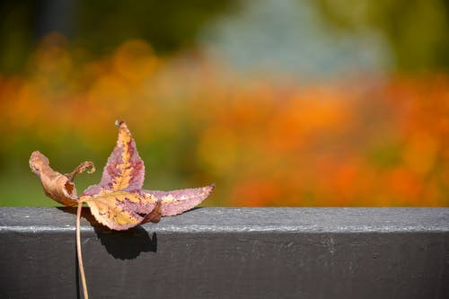 Free stock photo of autumn, bench, leaf, wood