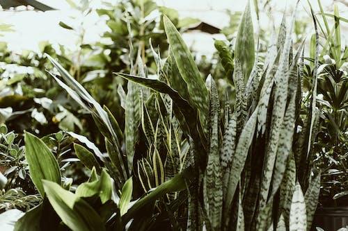 Foto stok gratis agrikultura, di luar rumah, flora, hijau