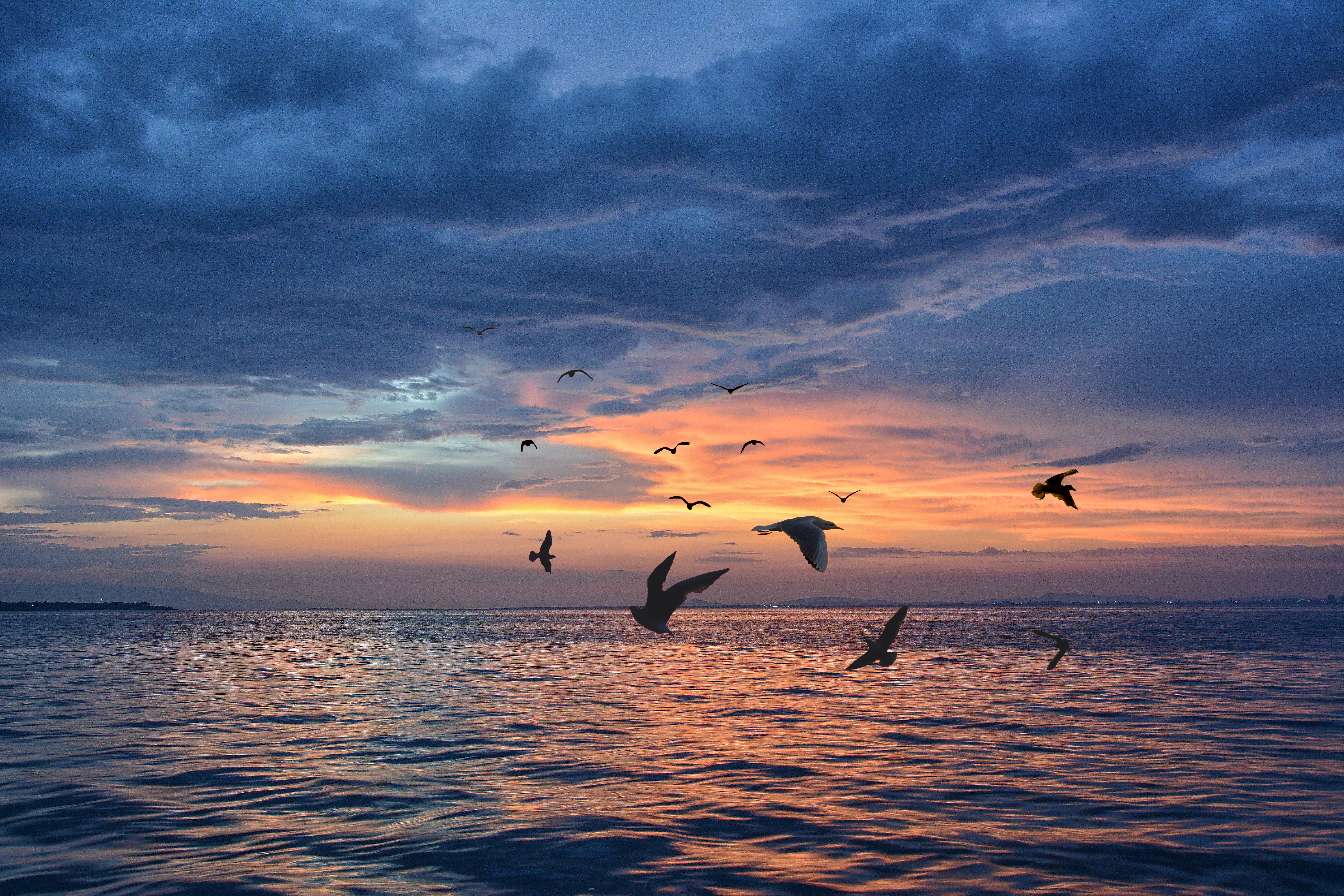 Photo of Birds Flying Above Body of Water During Golden Hour