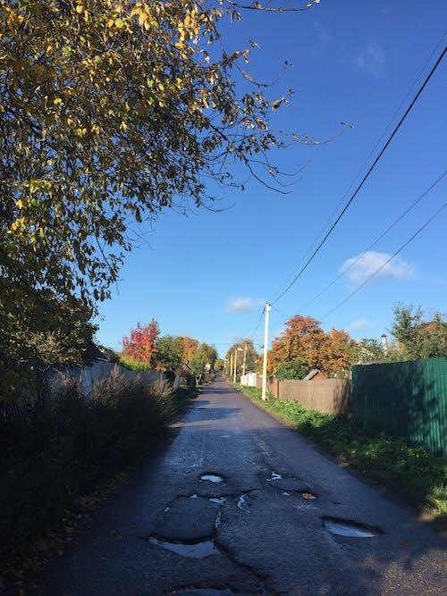 Бесплатное стоковое фото с асфальт, голубое небо, деревья, дорога