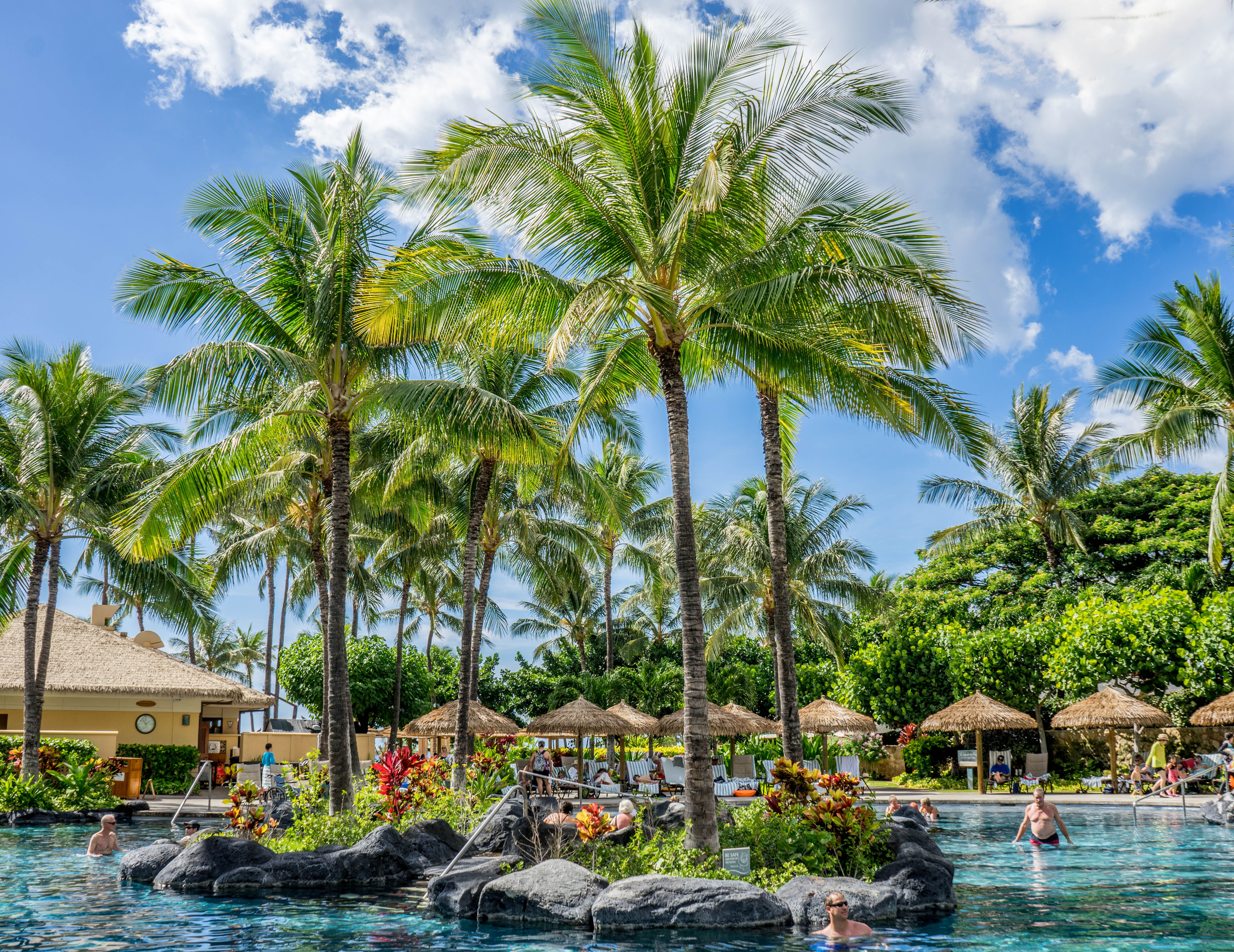 Palm Trees Surrounded by Body of Water
