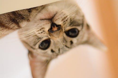 Darmowe zdjęcie z galerii z konkurencja, kot domowy, koty, zwierzę domowe