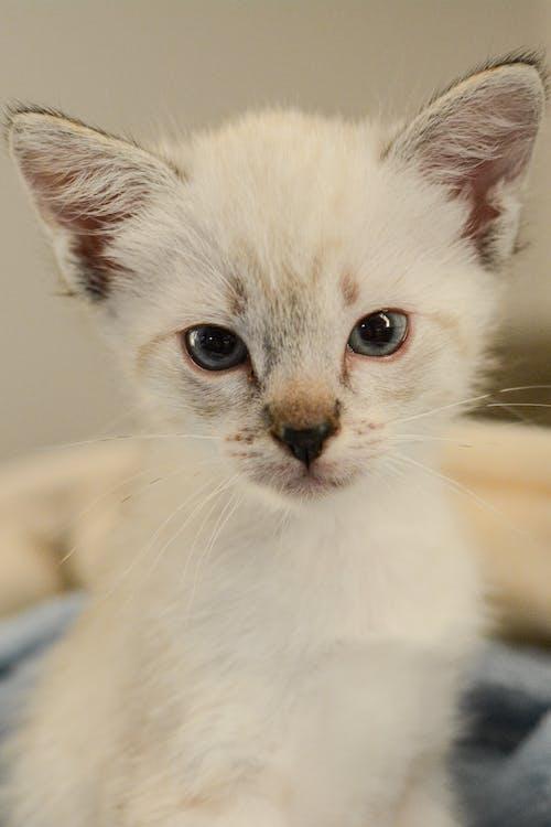 Close-up Photo of White Kitten