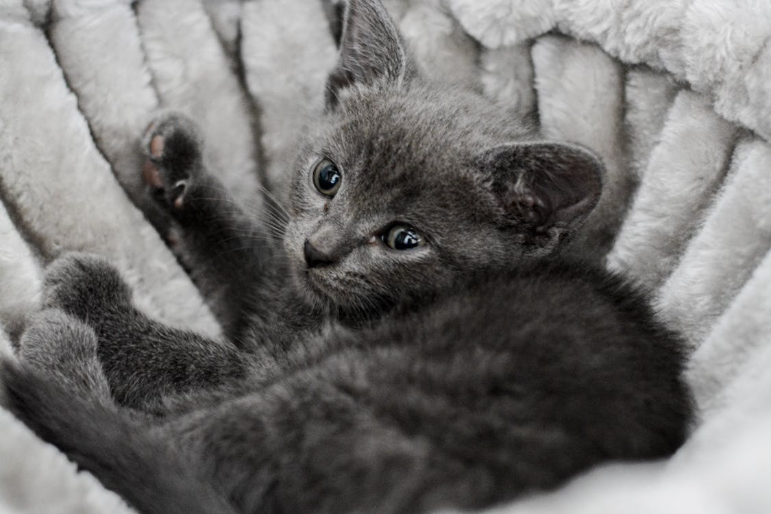 Grayscale Close-up Photo of Kitten Lying Down