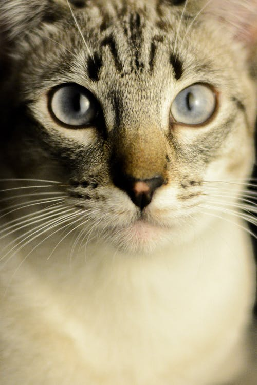 Close-up Photo of Tabby Cat's Face