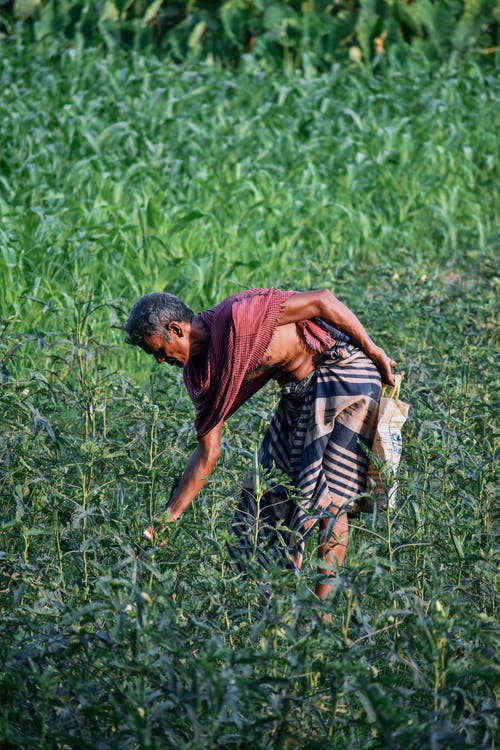 Бесплатное стоковое фото с азиатский, бангладеша, деревня, зеленый