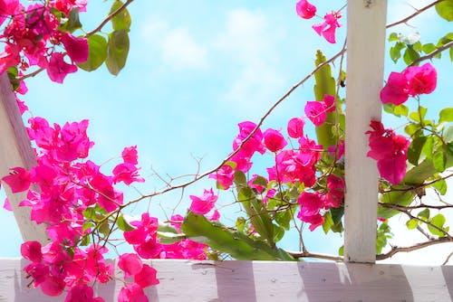 Gratis stockfoto met bloem, mooie bloemen