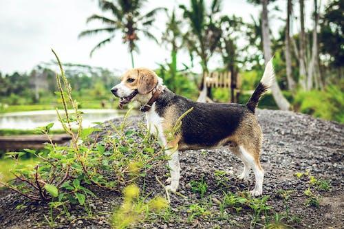 Imagine de stoc gratuită din adorabil, afară, animal, animal de casă
