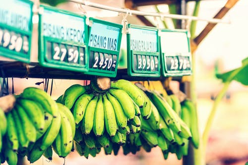Green Bananas Hanged with Price tags