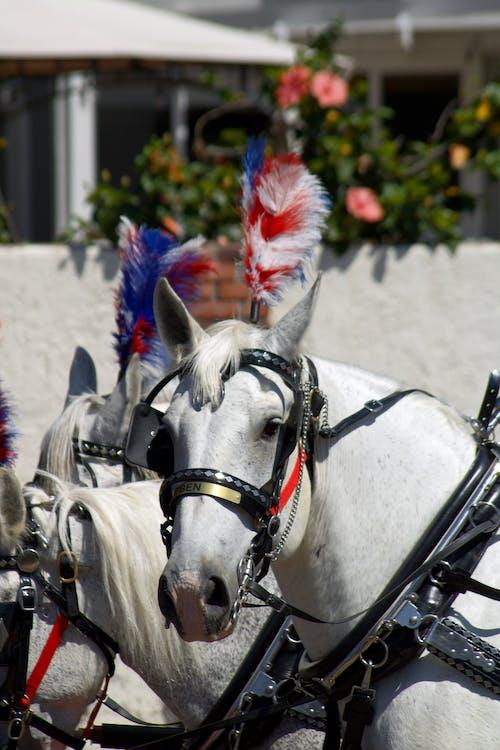 Fotobanka sbezplatnými fotkami na tému 4., americký, Amerika, biela