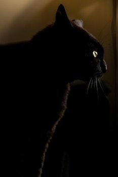 Free stock photo of night, animal, pet, eyes