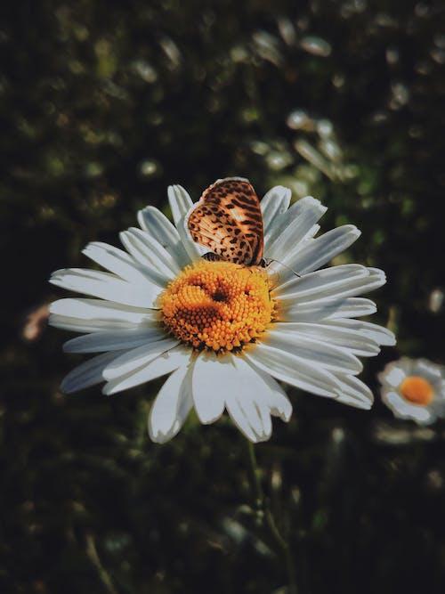 バタフライ, フローラ, 咲く, 花の無料の写真素材