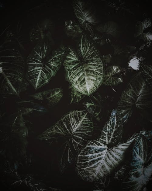 工場, 緑の無料の写真素材